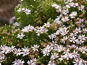 Wildflower Blooming
