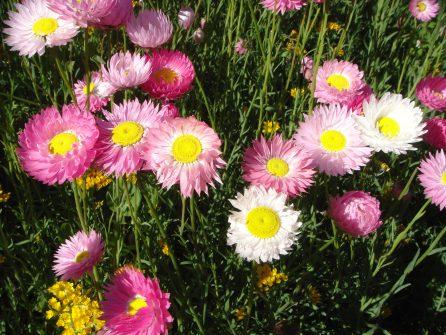 Spectacular wildflowers of Western Australia
