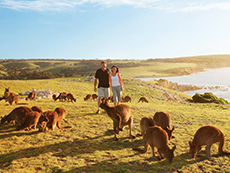 9 Day Adelaide, South Australia & Kangaroo Island with 3 Nights on the Murray Princess