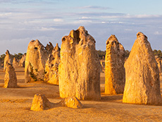 Pinnacles, Indian Ocean Drive & Moore River Day Tour
