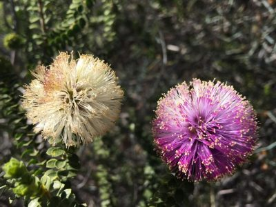 4 Day Margaret River, Busselton Wildflower