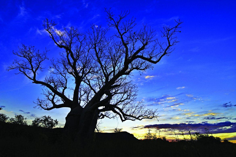 Elquestro Wilderness Park - Kimberley