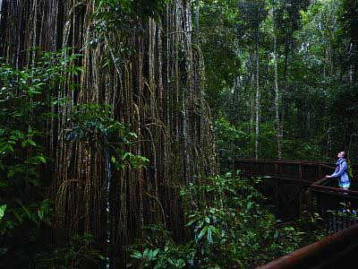 Rainforest Tasmania