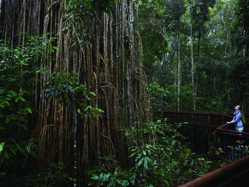 Rainforest Tasmania