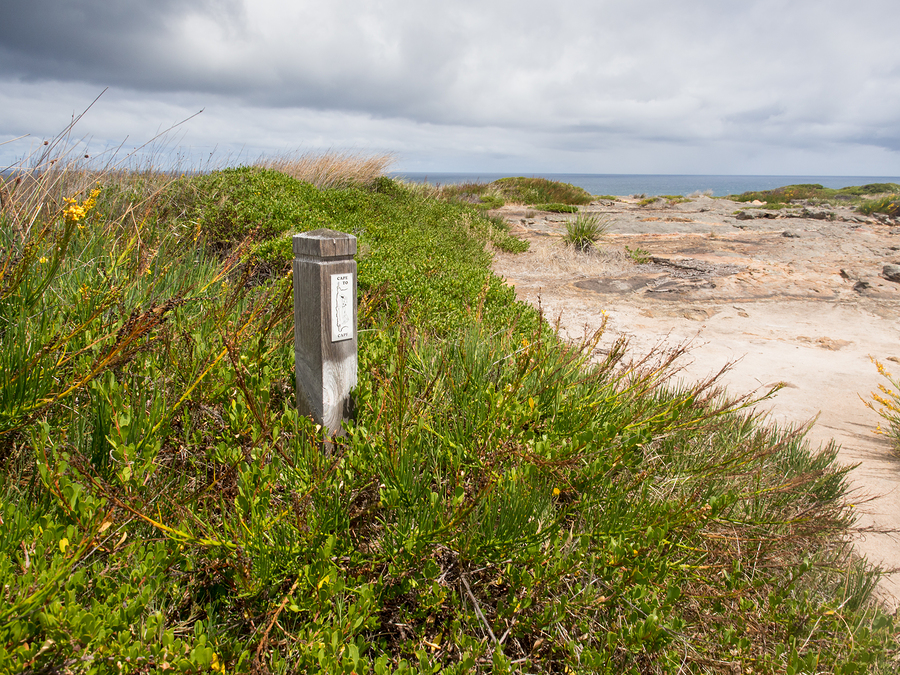 Busselton & Margaret River at Wildflower Time - Casey Tours