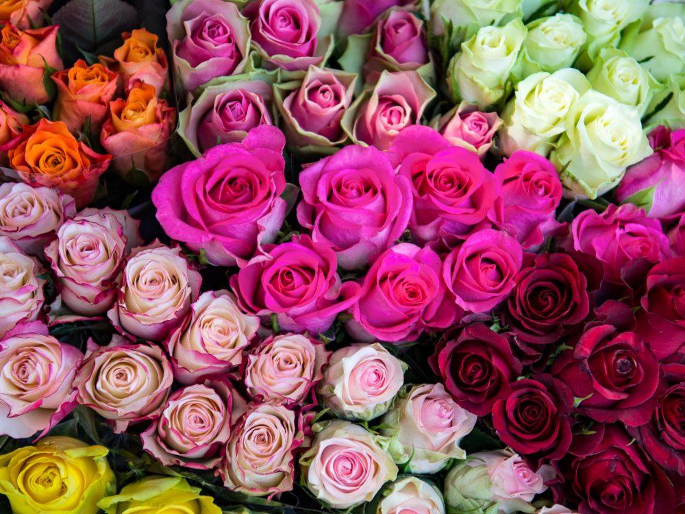 Roses on the flower market