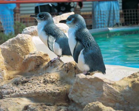 Penguin Island Wildlife Cruise
