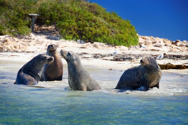 Penguin Island Wildlife Cruise Tours